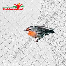 bird stuck in bird net