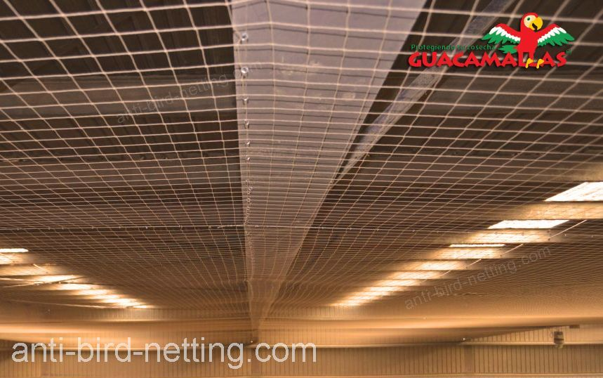 anti pigeon netting installed on under-roofs